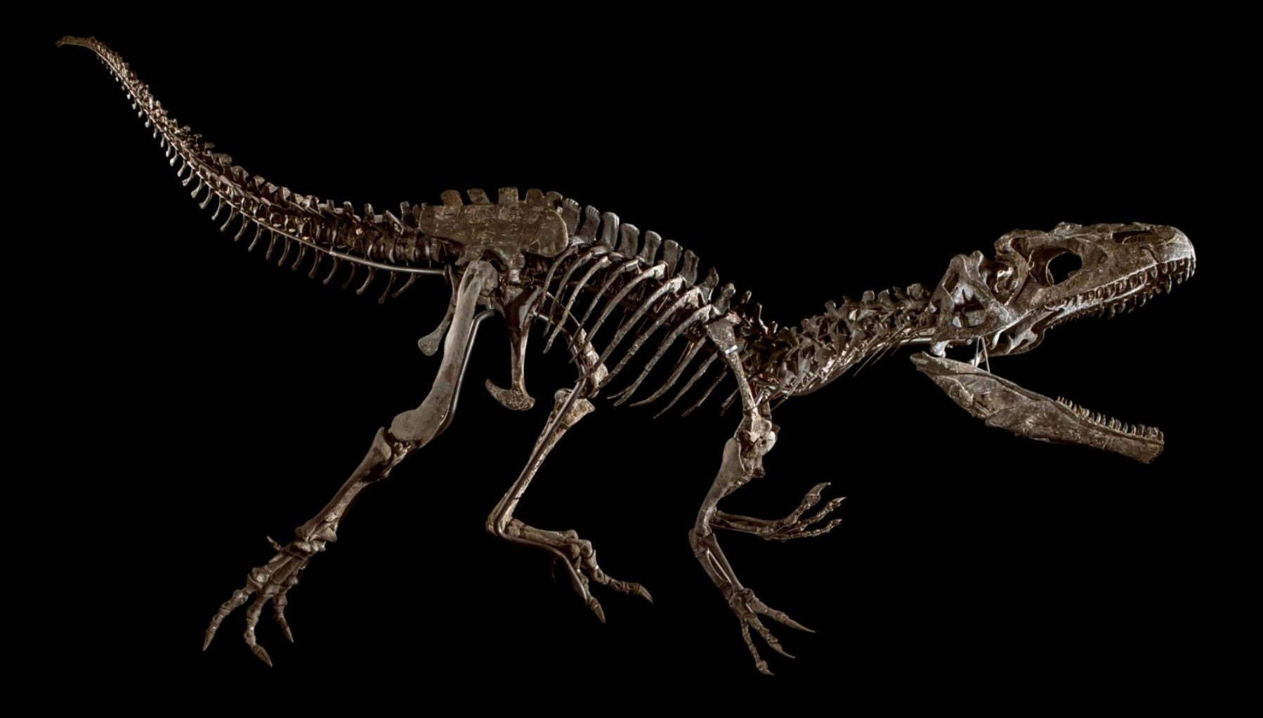 Are Dinosaur Fossils The Hot New Collectors Item Hong