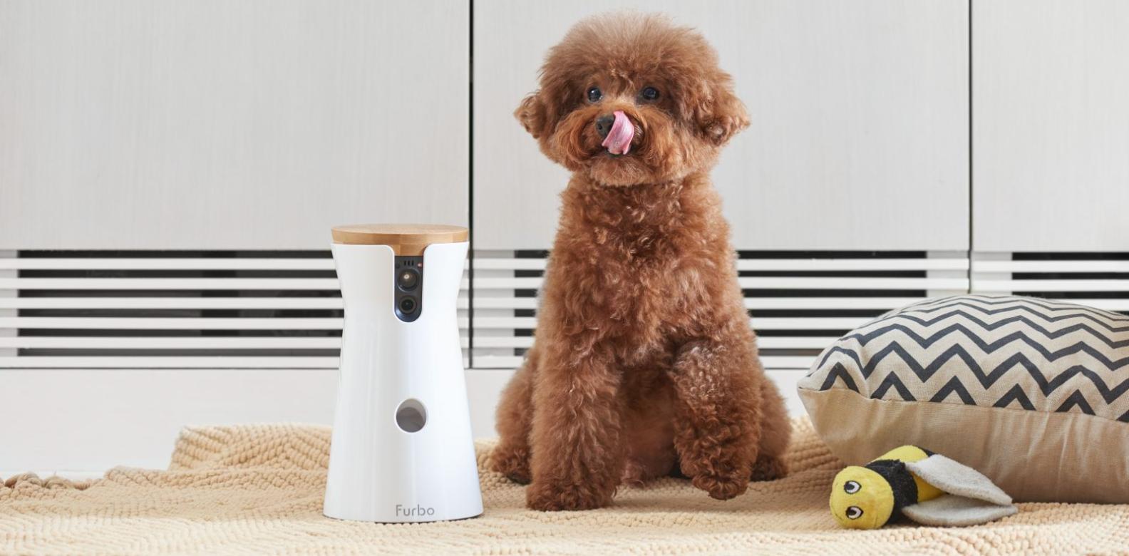 Pet Tech: 5 Clever Gadgets For Your Furry Friend
