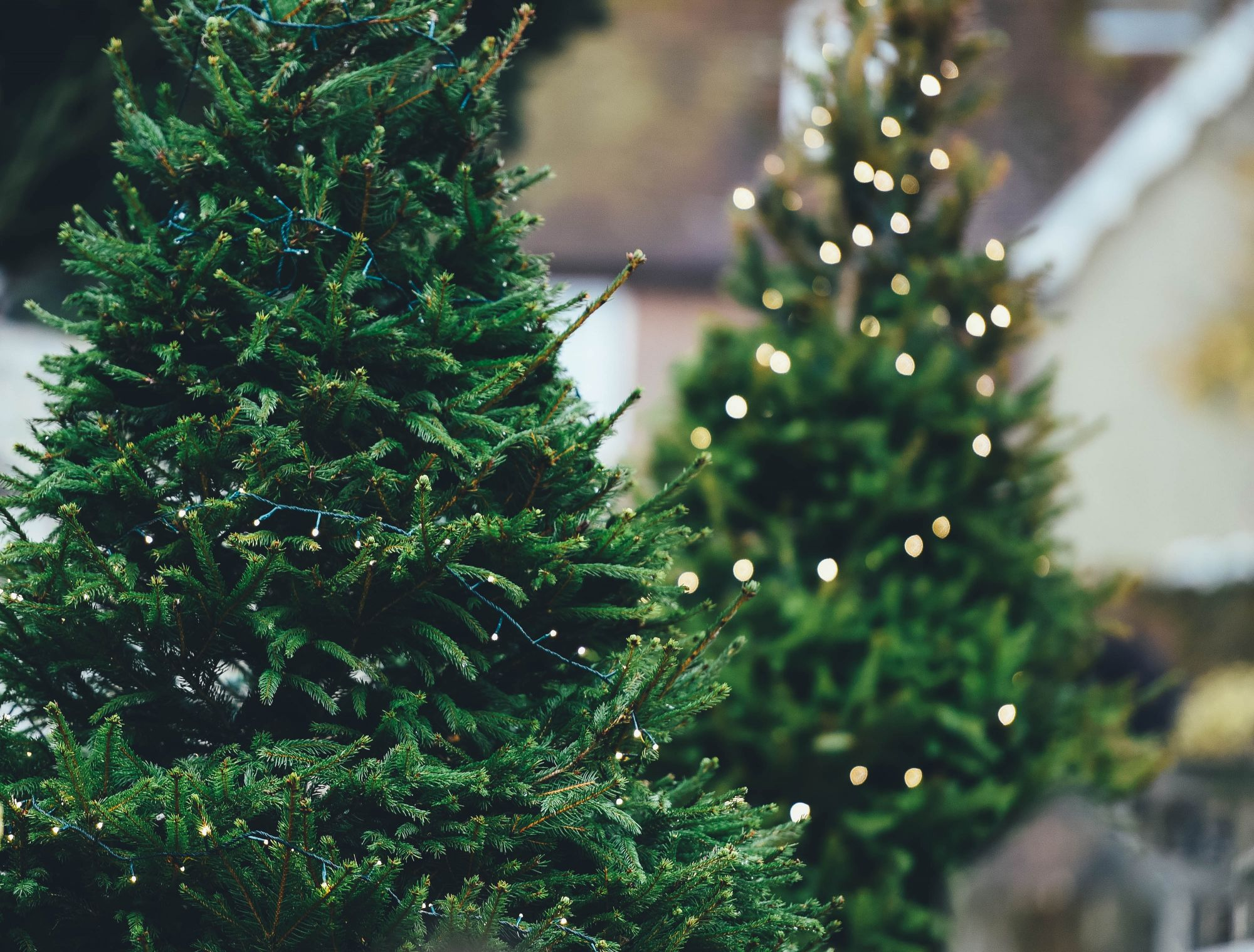 Best Christmas Trees.Where To Find The Best Christmas Trees In Hong Kong Hong