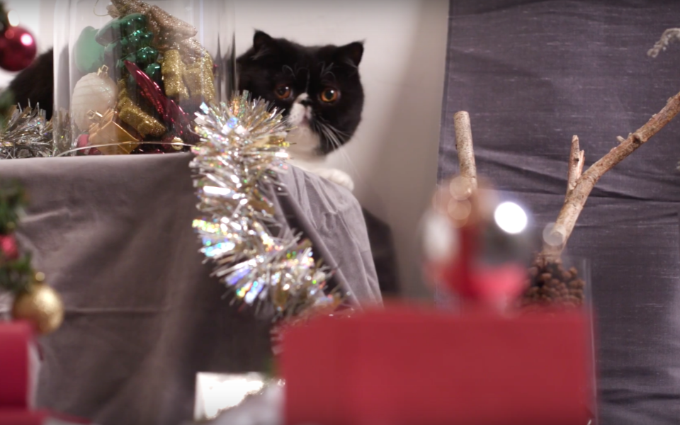 Video: The Most Purrfect Gift Ideas For Christmas