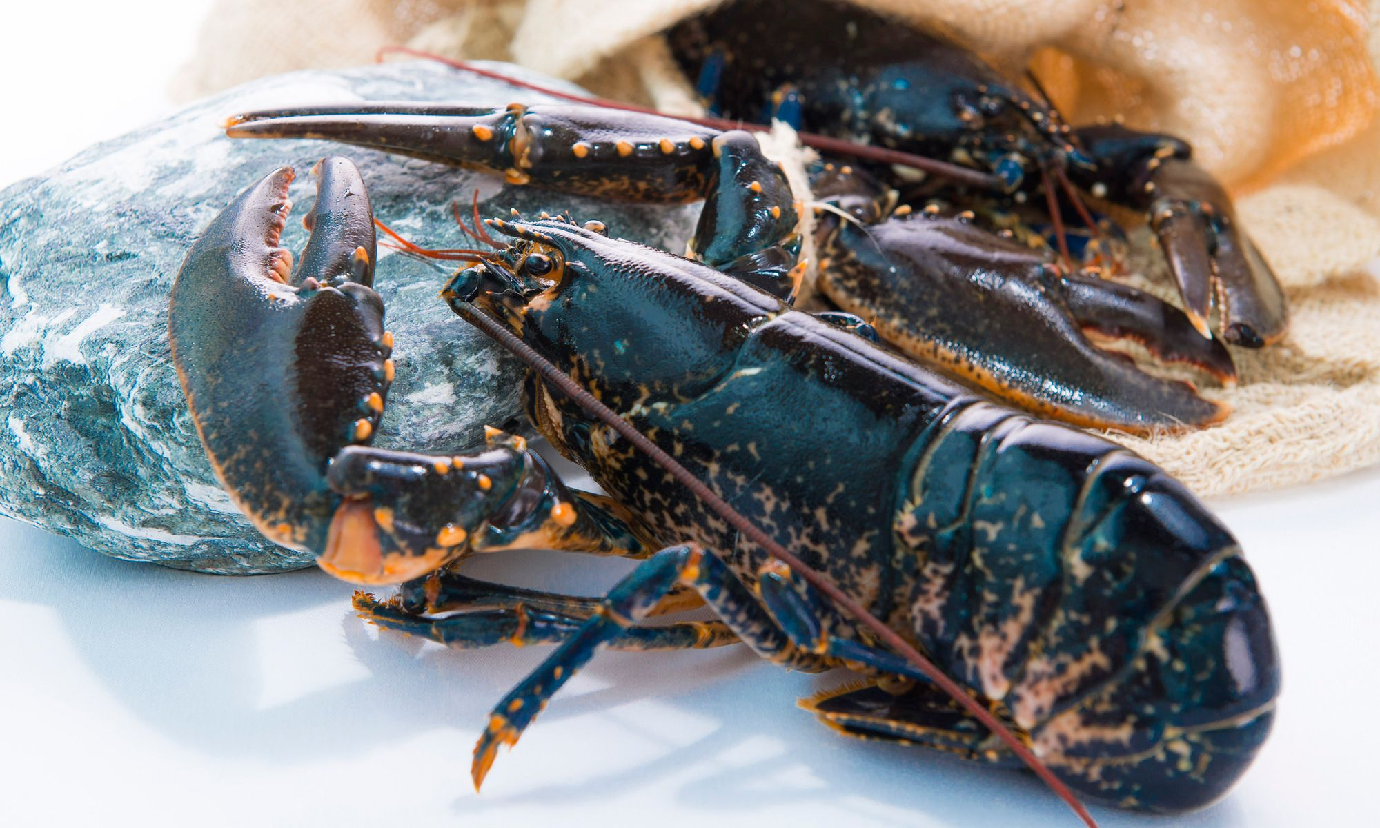Rech By Alain Ducasse Presents Brittany Blue Lobster Menu