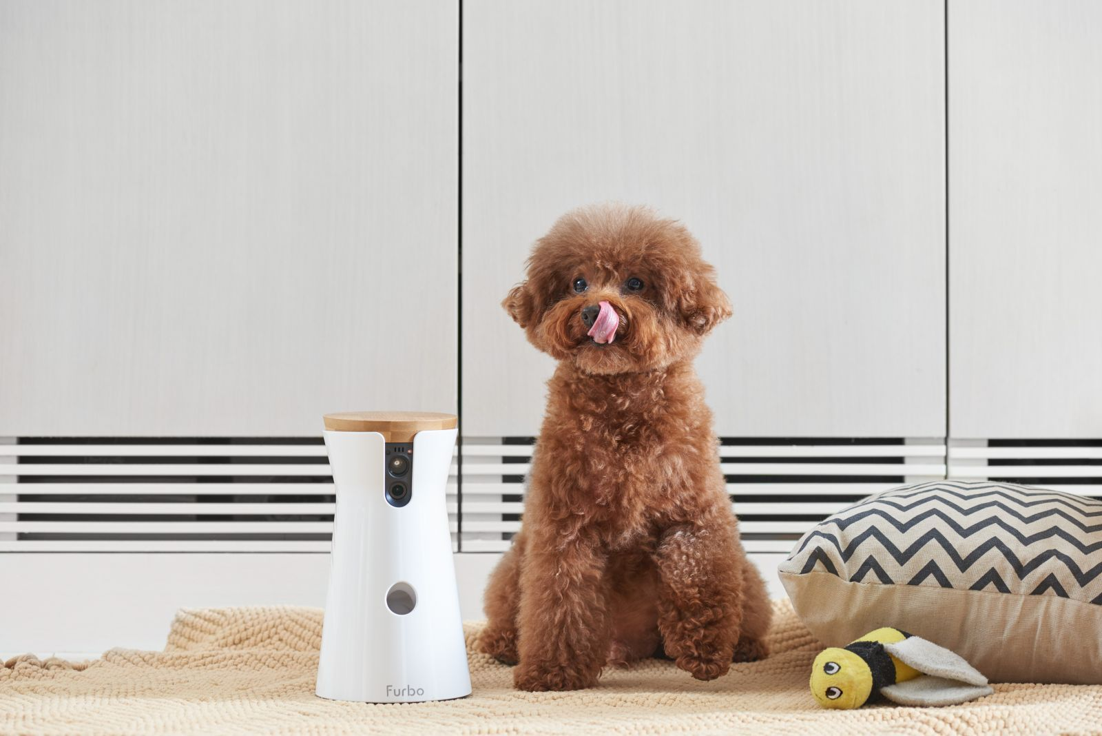 Pet Tech: 5 Clever Gadgets For Your Furry Friend