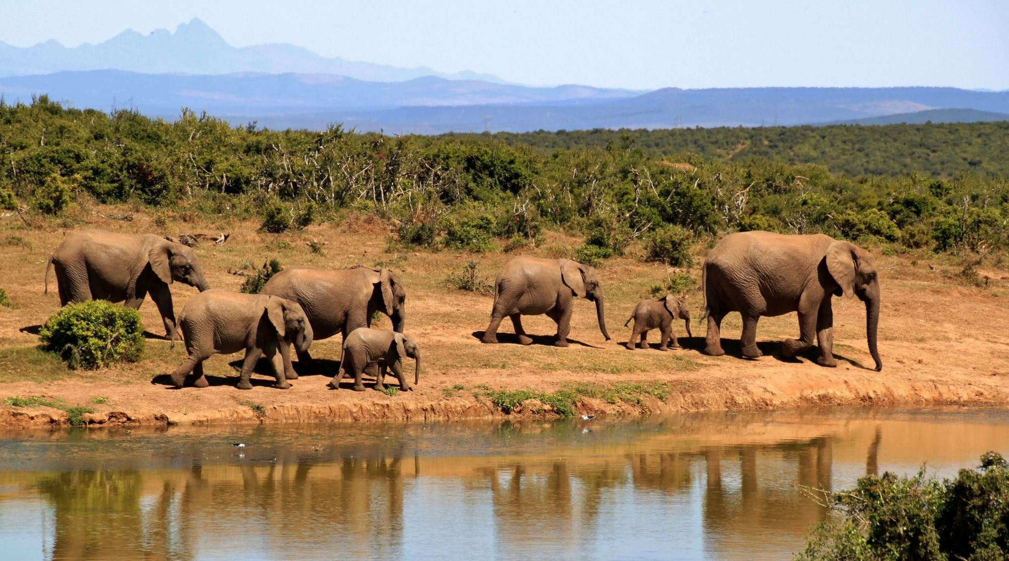 Gentle Giants: 3 Luxury Elephant Camps Around The World