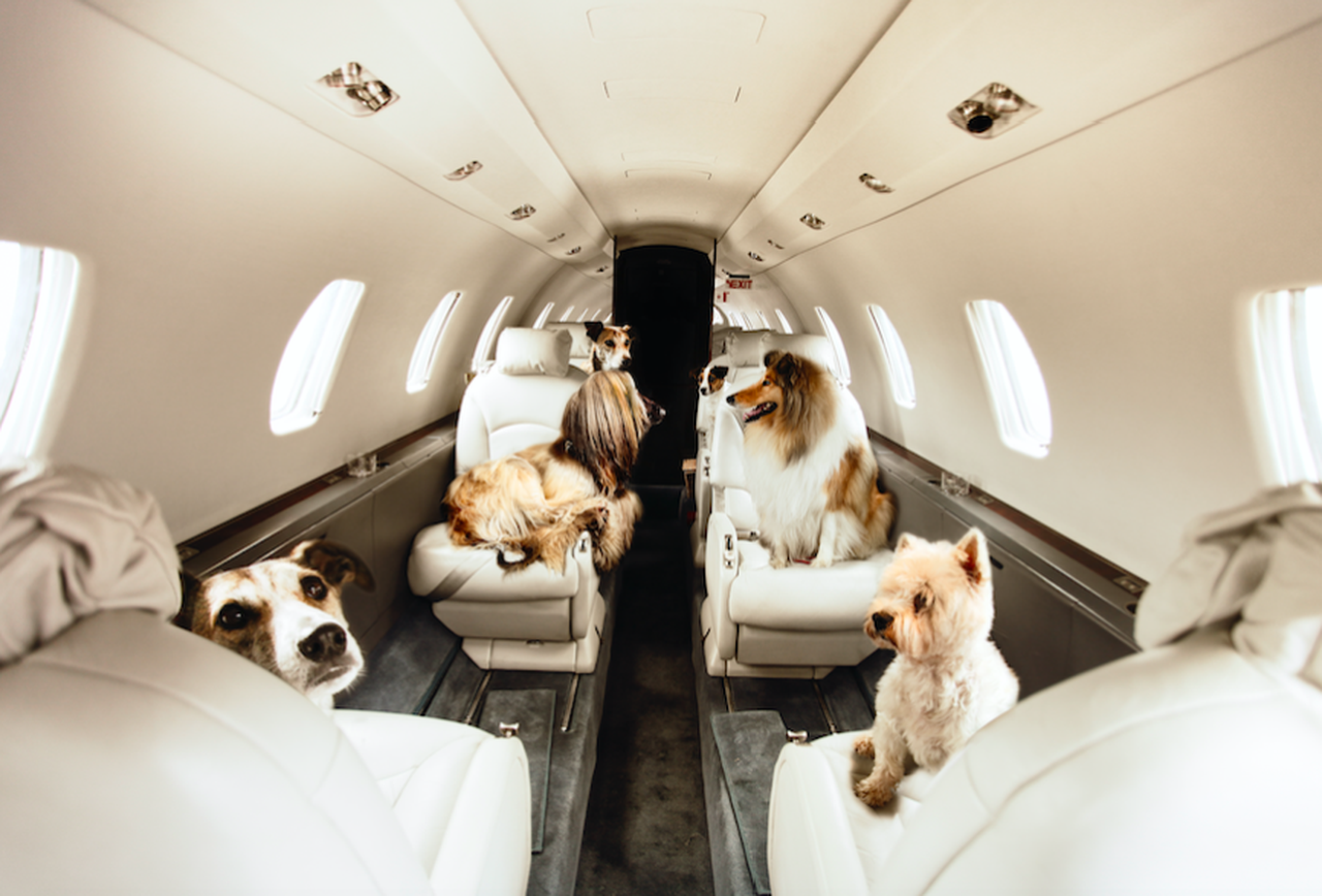 This Company Offers Private Jet Travel For Pets
