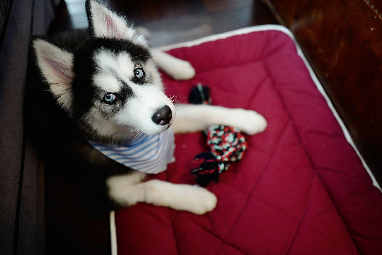 30 Of Hong Kong's Most Pampered Pets