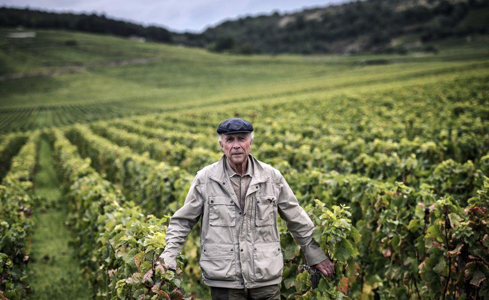Legendary Winemaker Turns Global Spotlight on Burgundy's Vineyards
