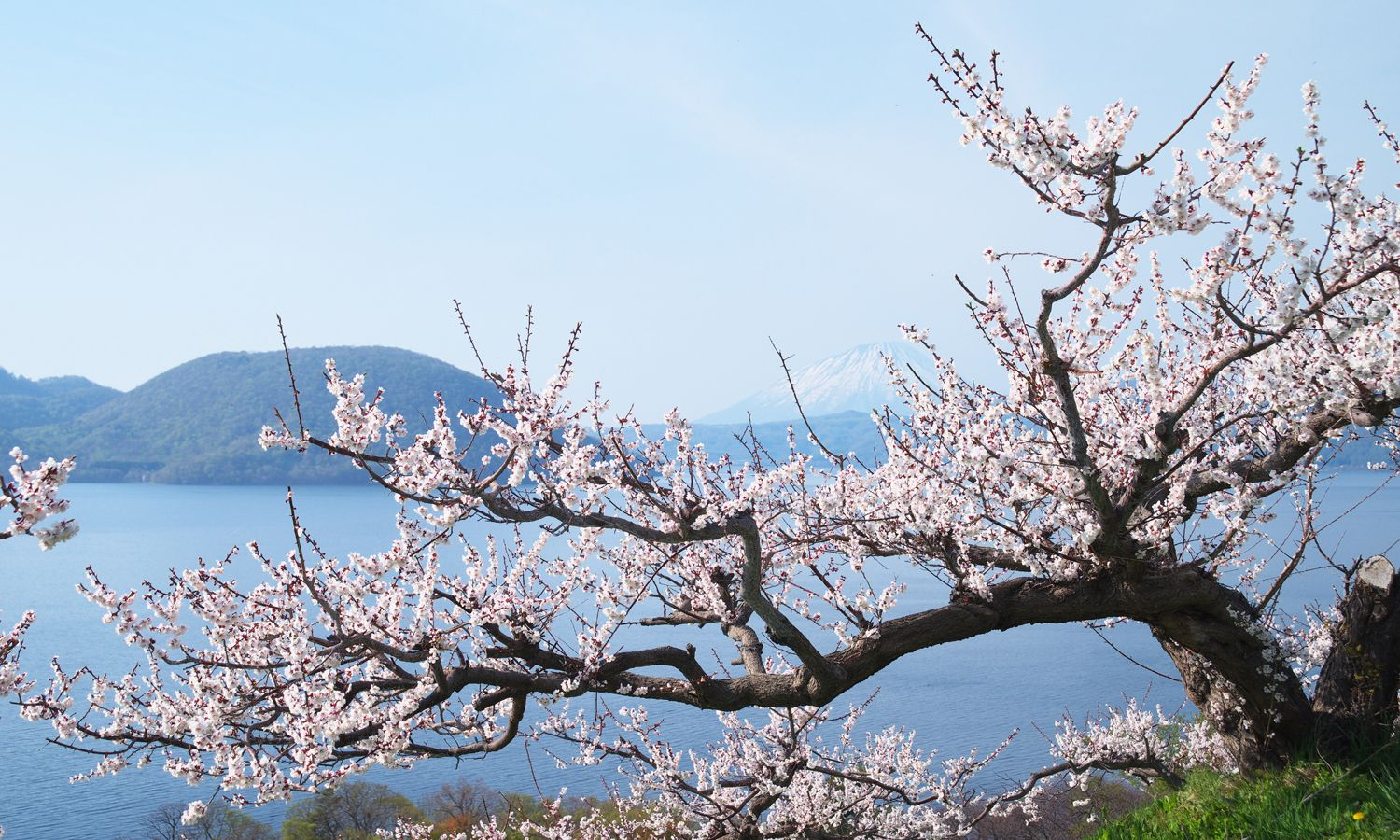 7 Places In Japan to See The Cherry Blossoms In Late Spring