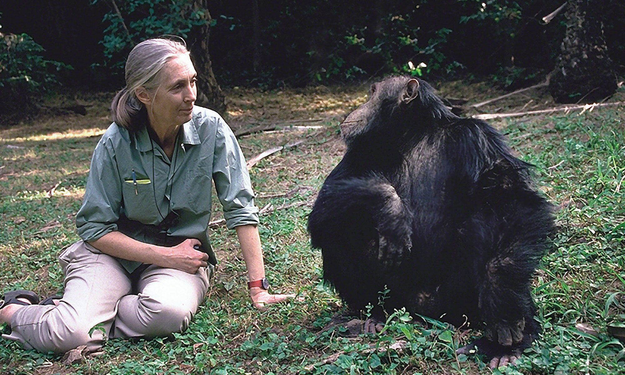 Jungle Jane: Primatologist Jane Goodall on her Wild Life