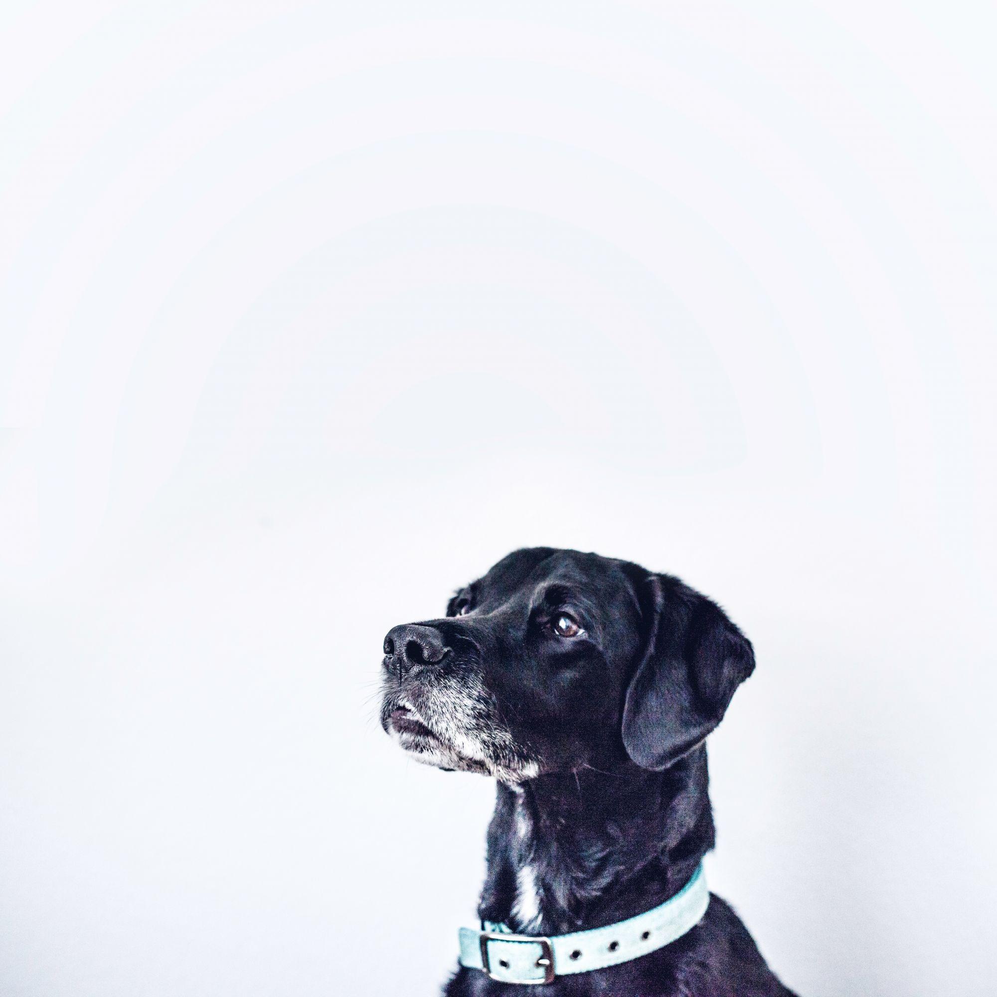 5 Hong Kong Charities That Support Animals