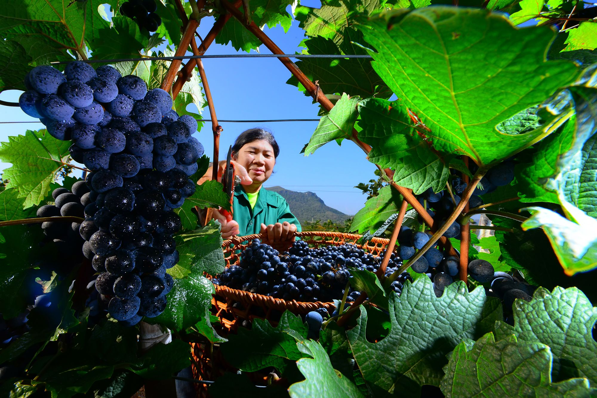 Is Extreme Winemaking About To Become The New Normal?