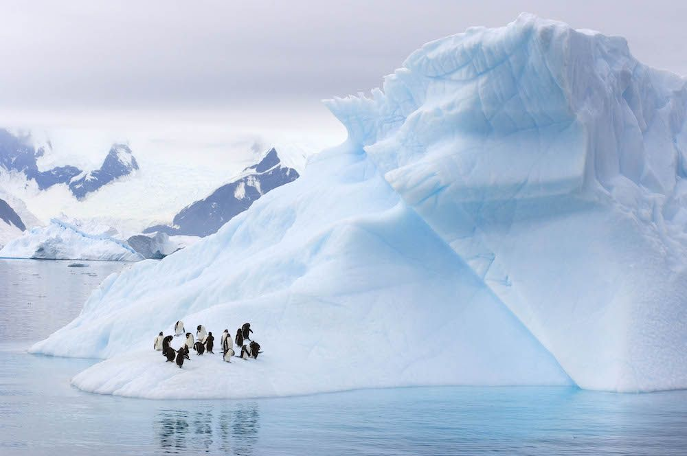 Gentoo Penguins and Chinstrap Penguins on an iceberg on the Western Antarctic Peninsula (photo: Getty)