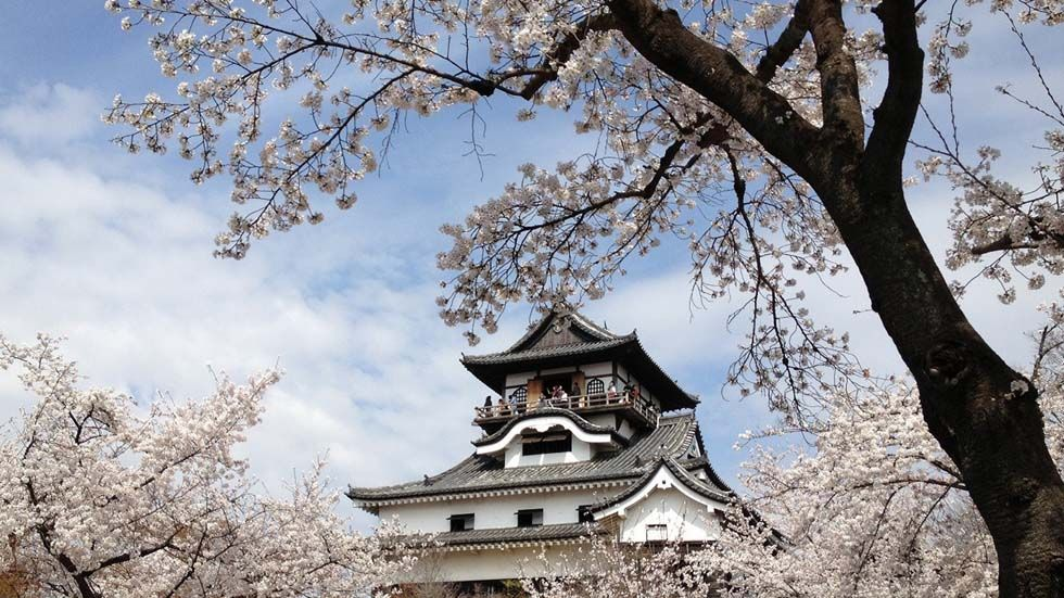 Sakura Season 2020: The Best Places To See Cherry Blossoms In Japan