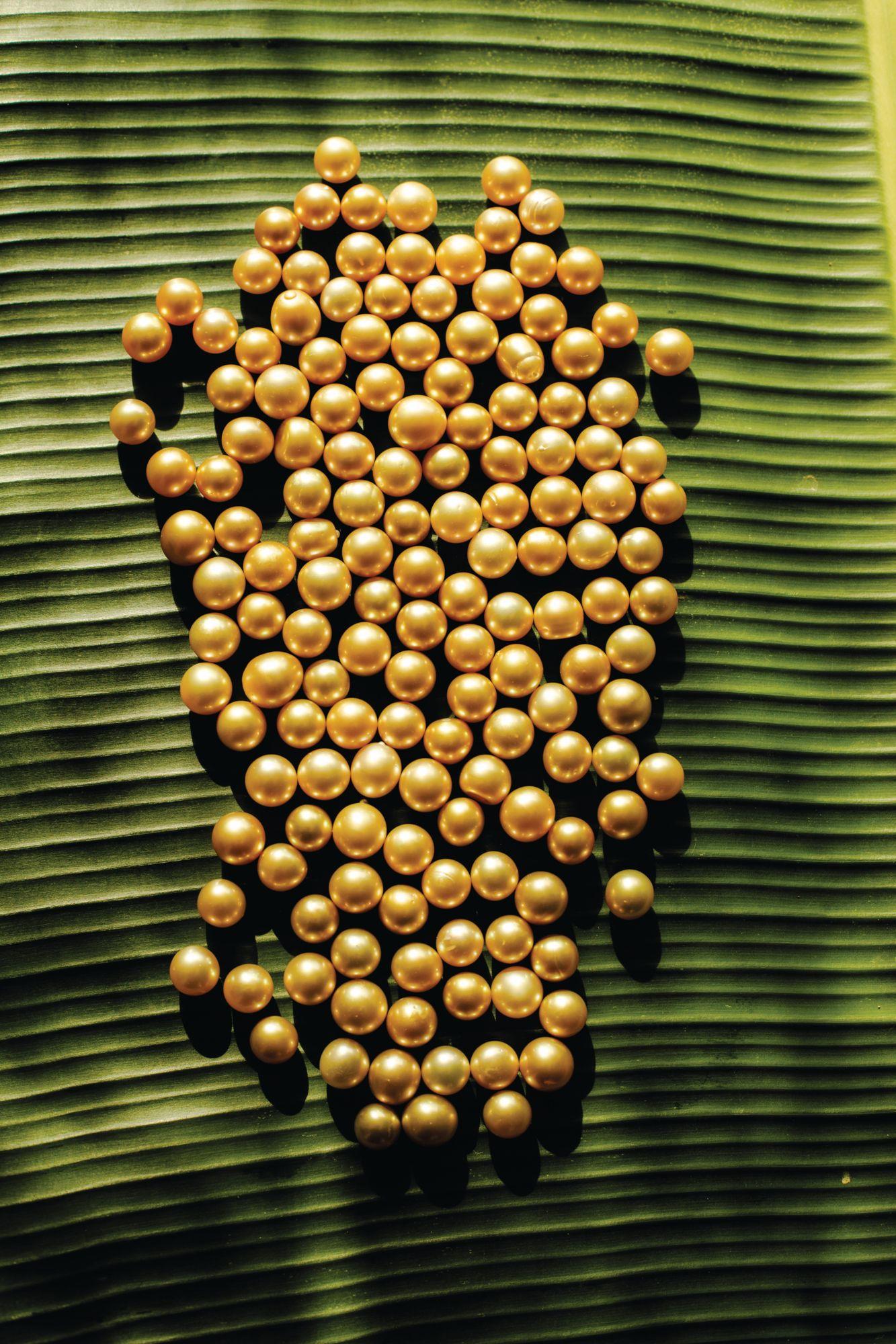 Ngọc trai South Sea được thu hoạch tại Palawan bởi Jewelmer