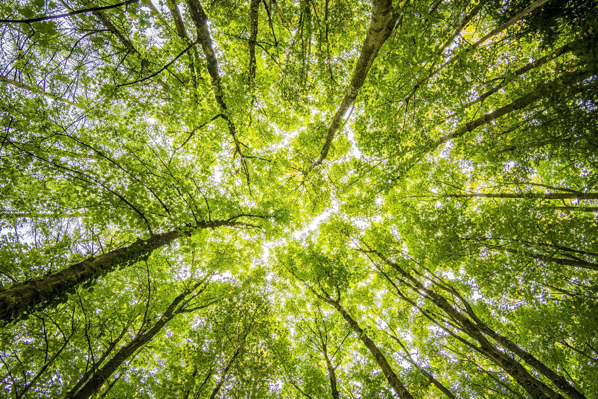 What You Need To Know About Forest Bathing & Its Calming Benefits