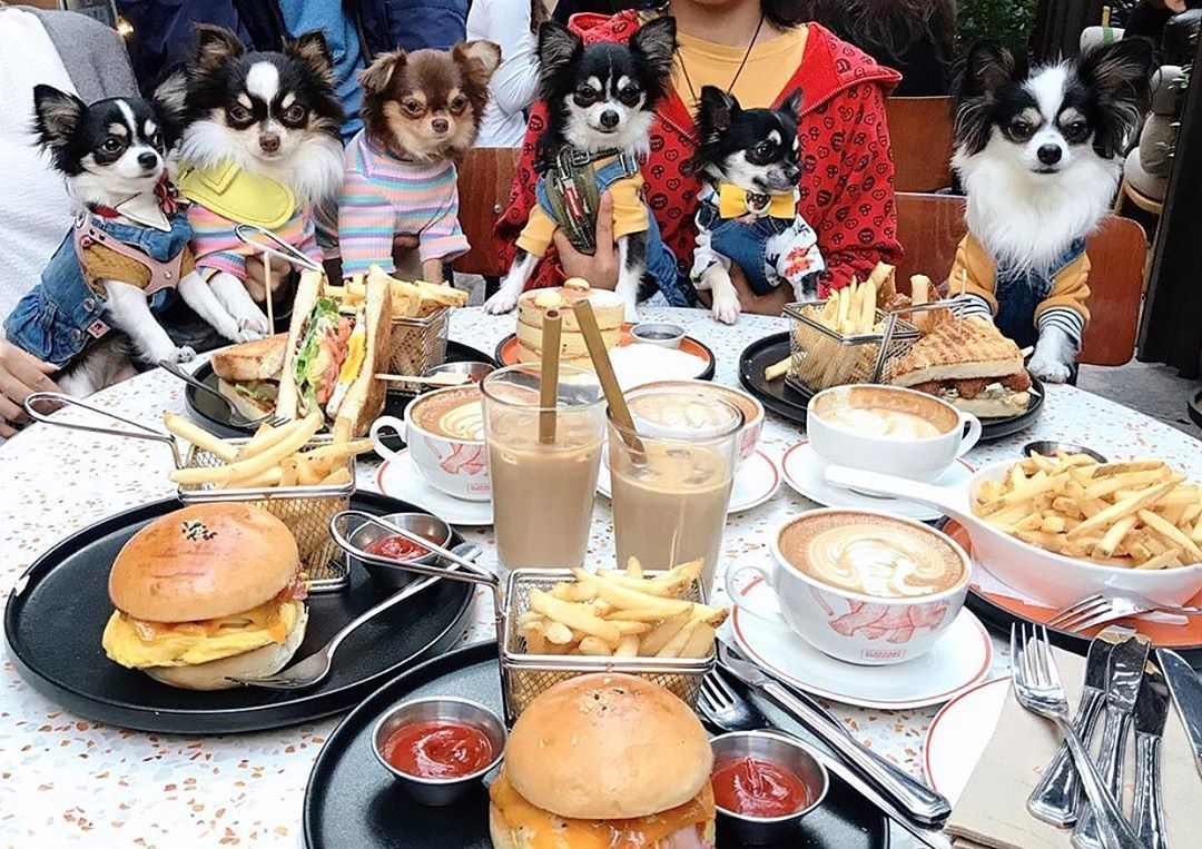 The Best Dog-Friendly Restaurants And Cafes In Hong Kong