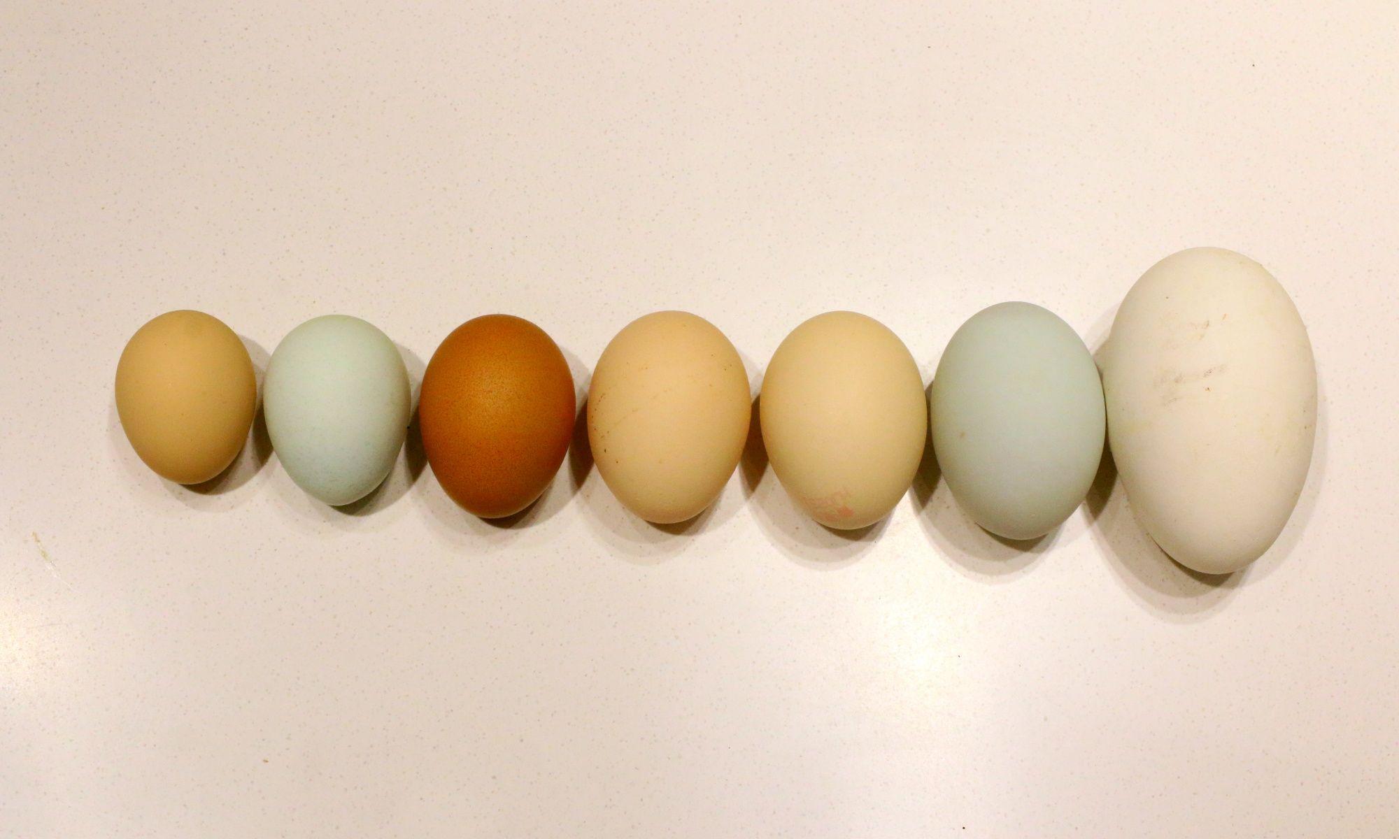 Behold the $11 Supermarket Egg (Yes, Singular)