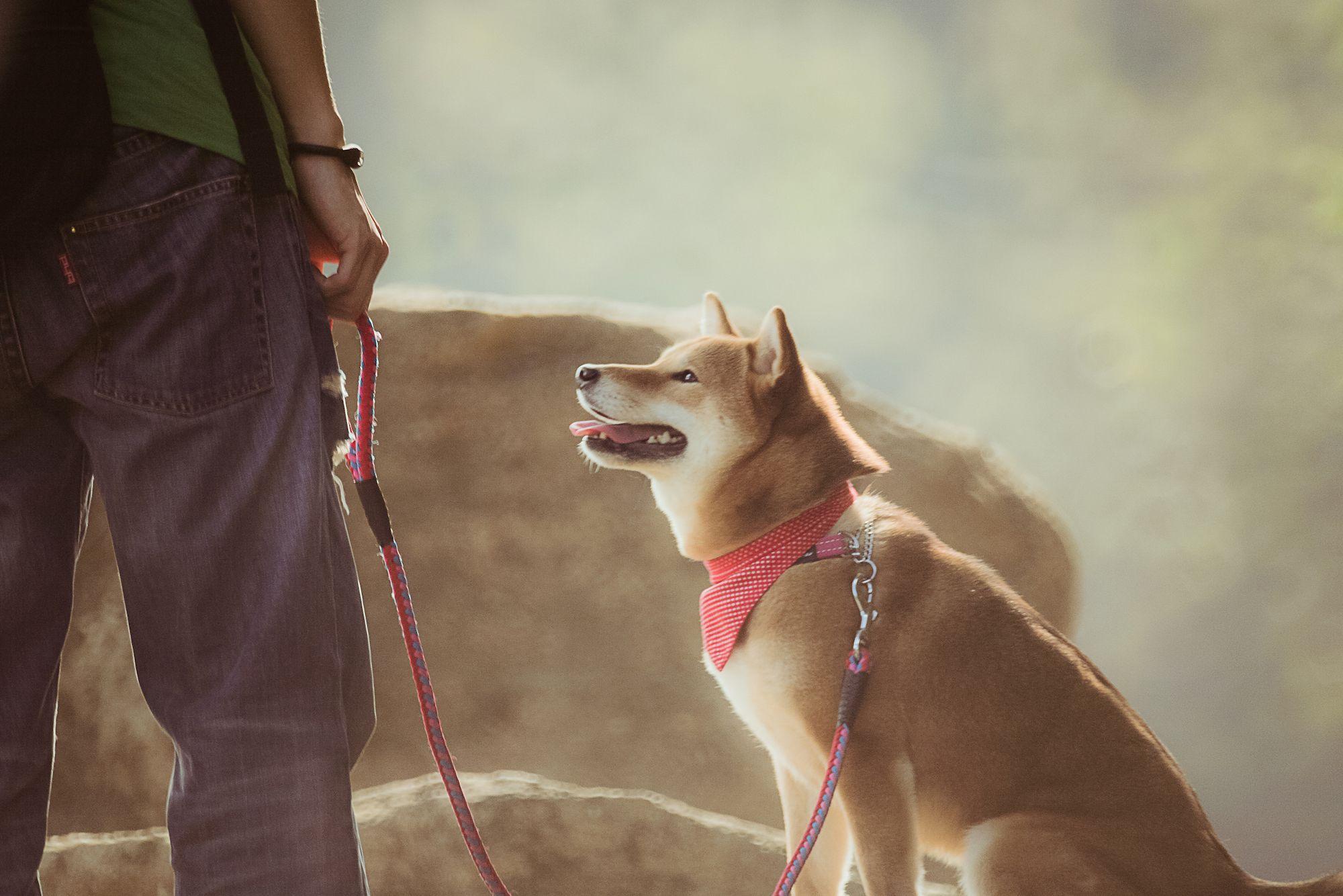 5 Reasons Why You Should Adopt a Dog in Hong Kong