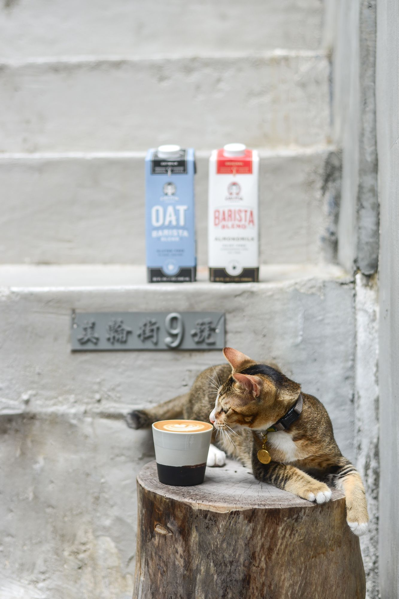 "Green Monday Partners With Peta To Bring Back The ""Coffee For Cats"" Campaign"
