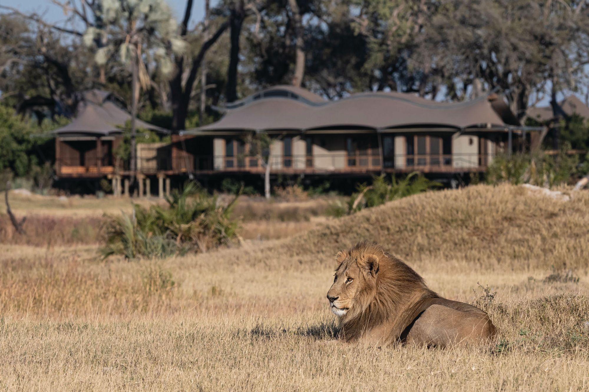 A Look at Xigera Safari Lodge, Botswana's New Solar-Powered and Art-Filled Hotel