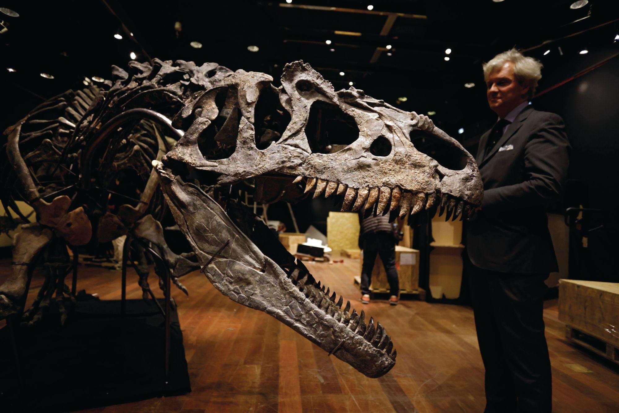 今年十月,巴黎的拍賣會上以300萬歐元售出了一個十公尺長的異龍化石,它是暴龍體型較小的近親(Photo: Image Thomas Coex/AFP)
