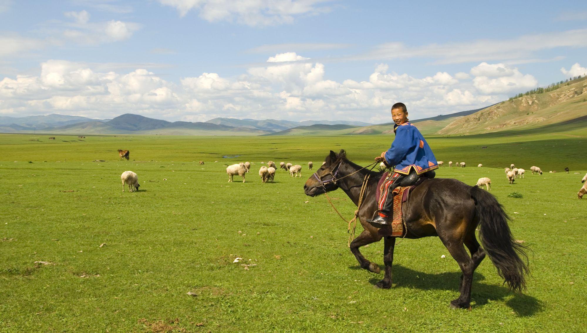 Mongolian boy tending his flock of sheep / goats.