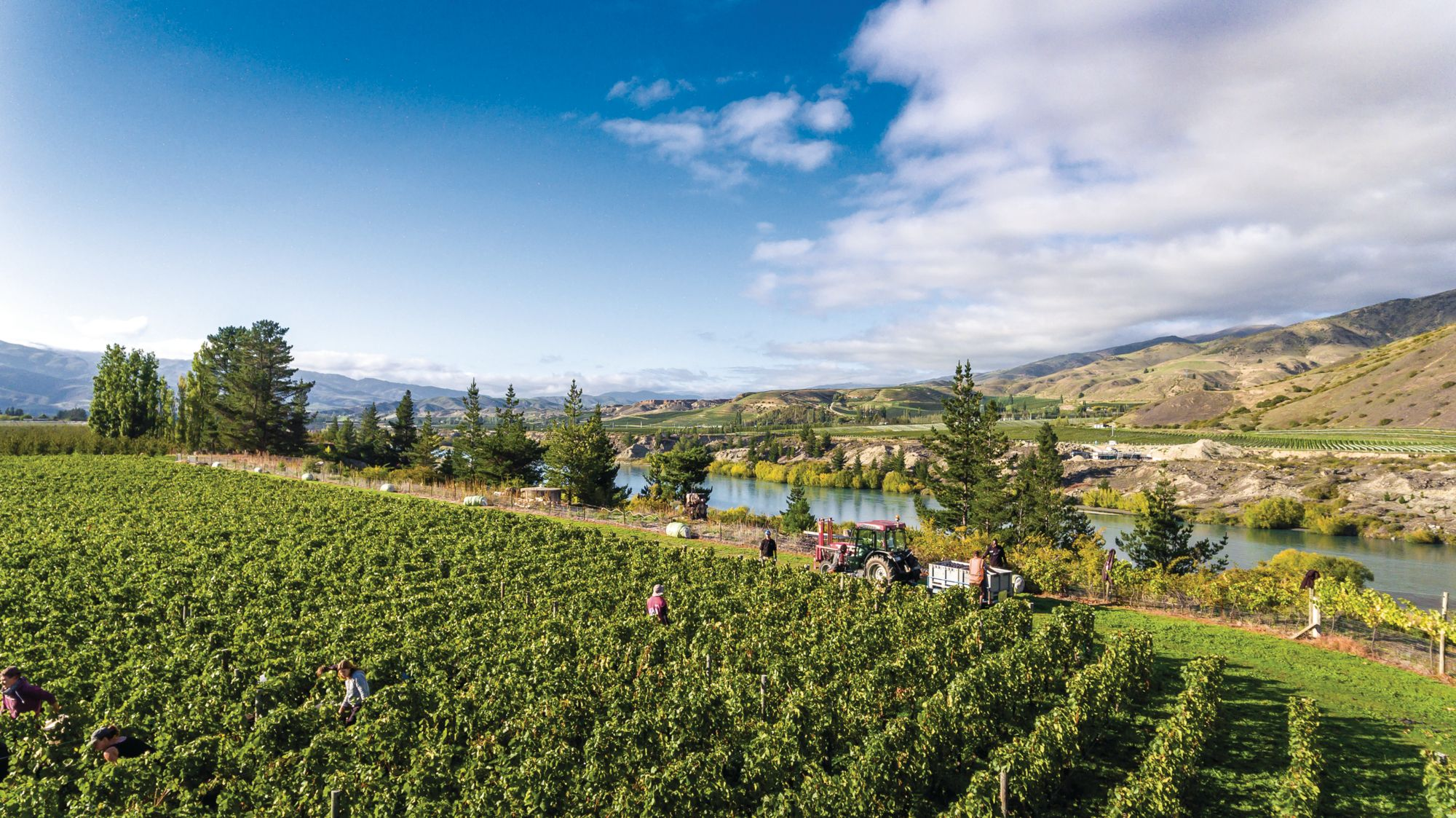 Expert Tips On How To Start A Winery