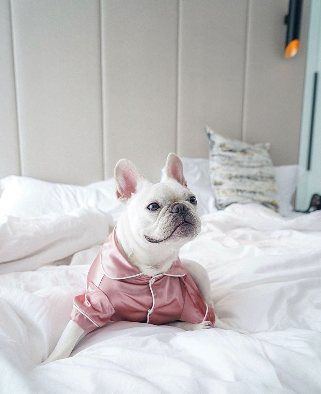 7 Luxury Pet-Friendly Hotels For Your Next Hong Kong Staycation