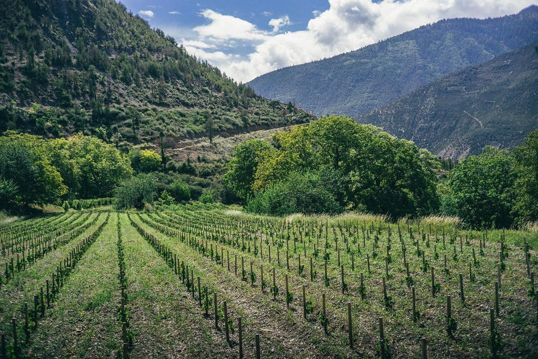 The Winemaker Behind China's Ao Yun Talks Producing Wine At The Foot Of The Himalayas And Its New Vintage