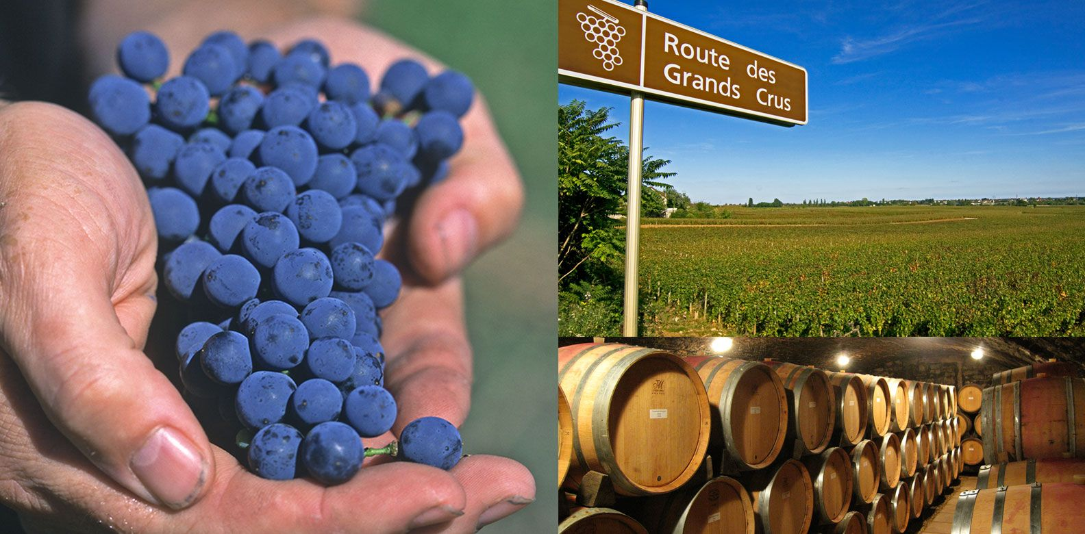 4 Amazing Wine Growing Regions To Tour The Fruits Of The Vines