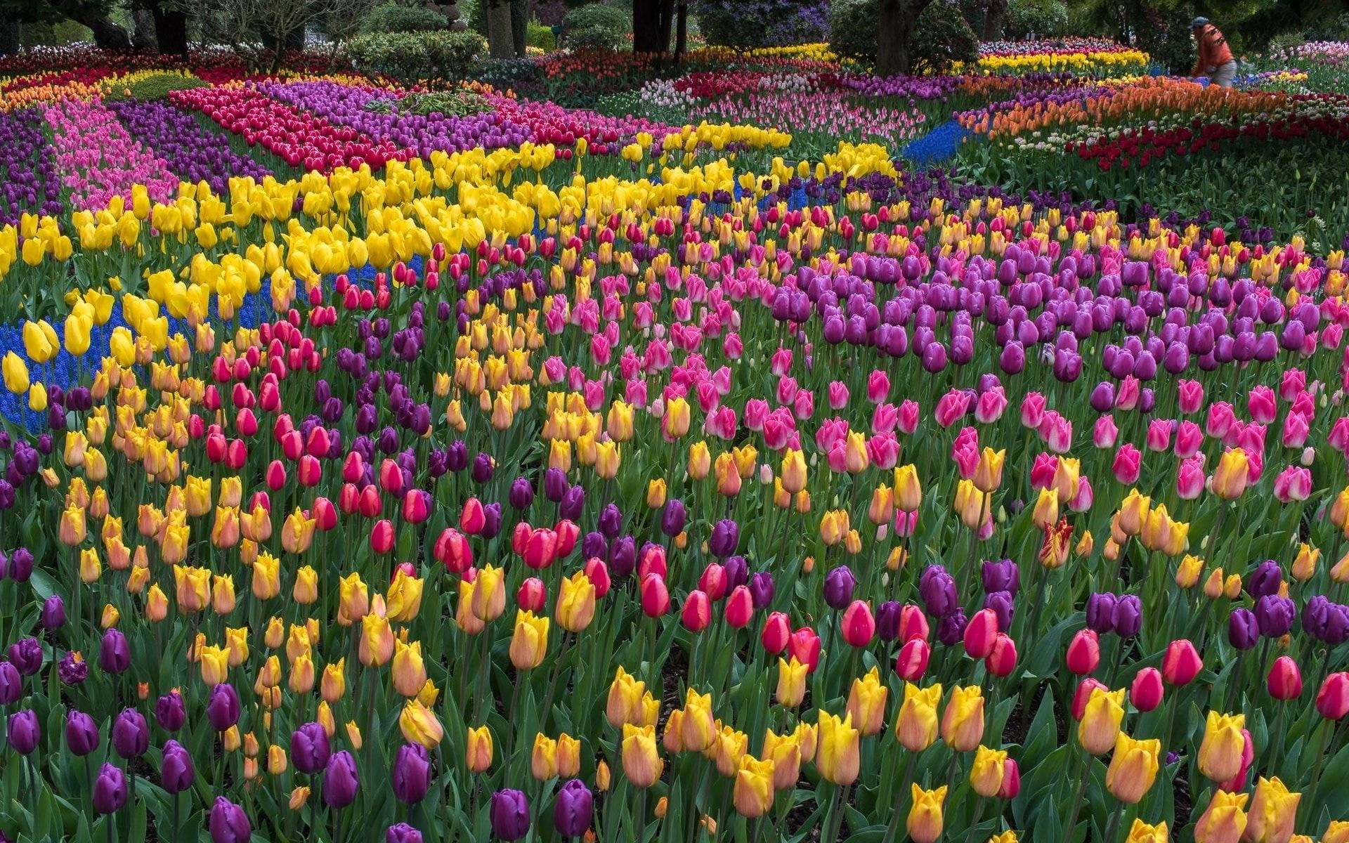 Love Spring Flowers Visit These 7 Gardens Around The World To