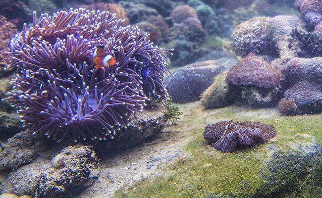The Andaman Langkawi Marine Life Laboratory