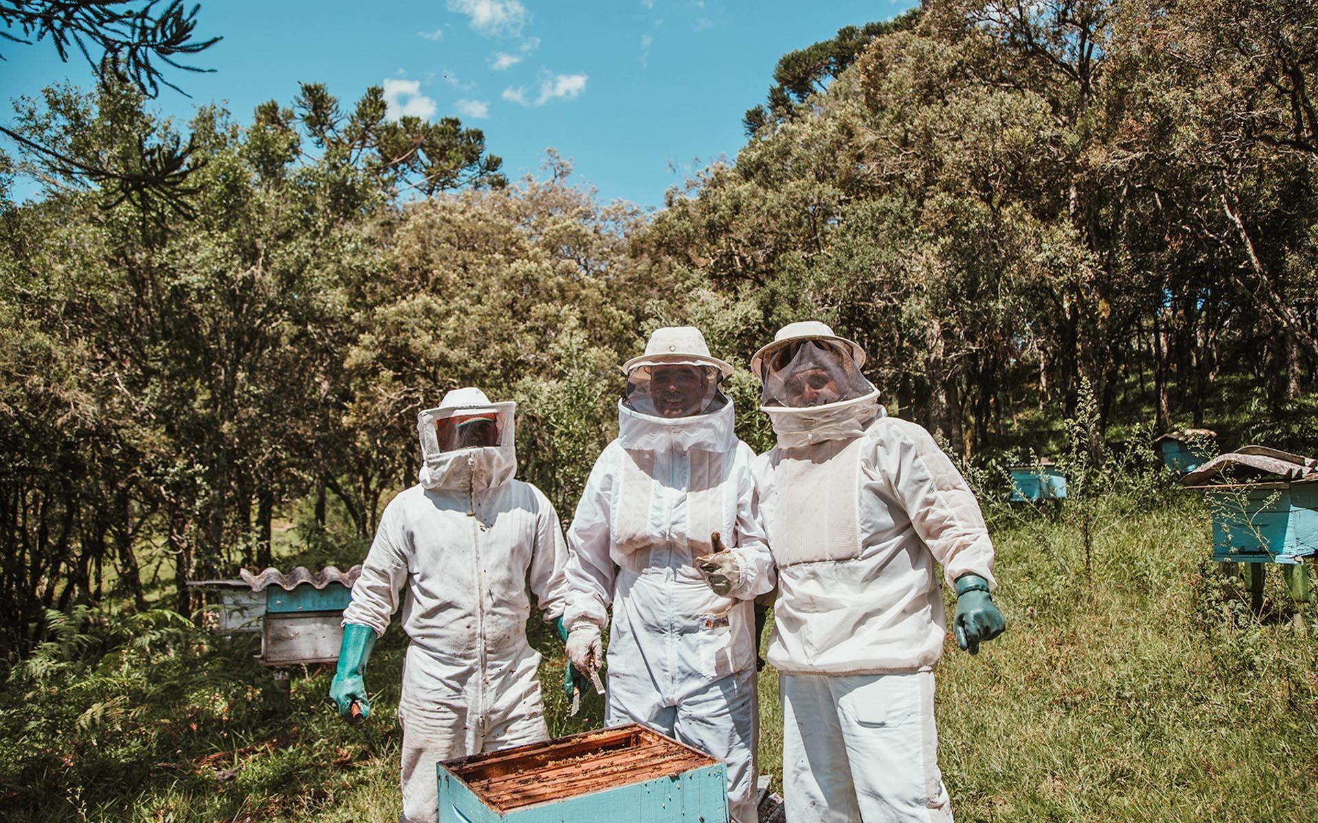 Adopt a Trigona Beehive For RM500 Per Annum