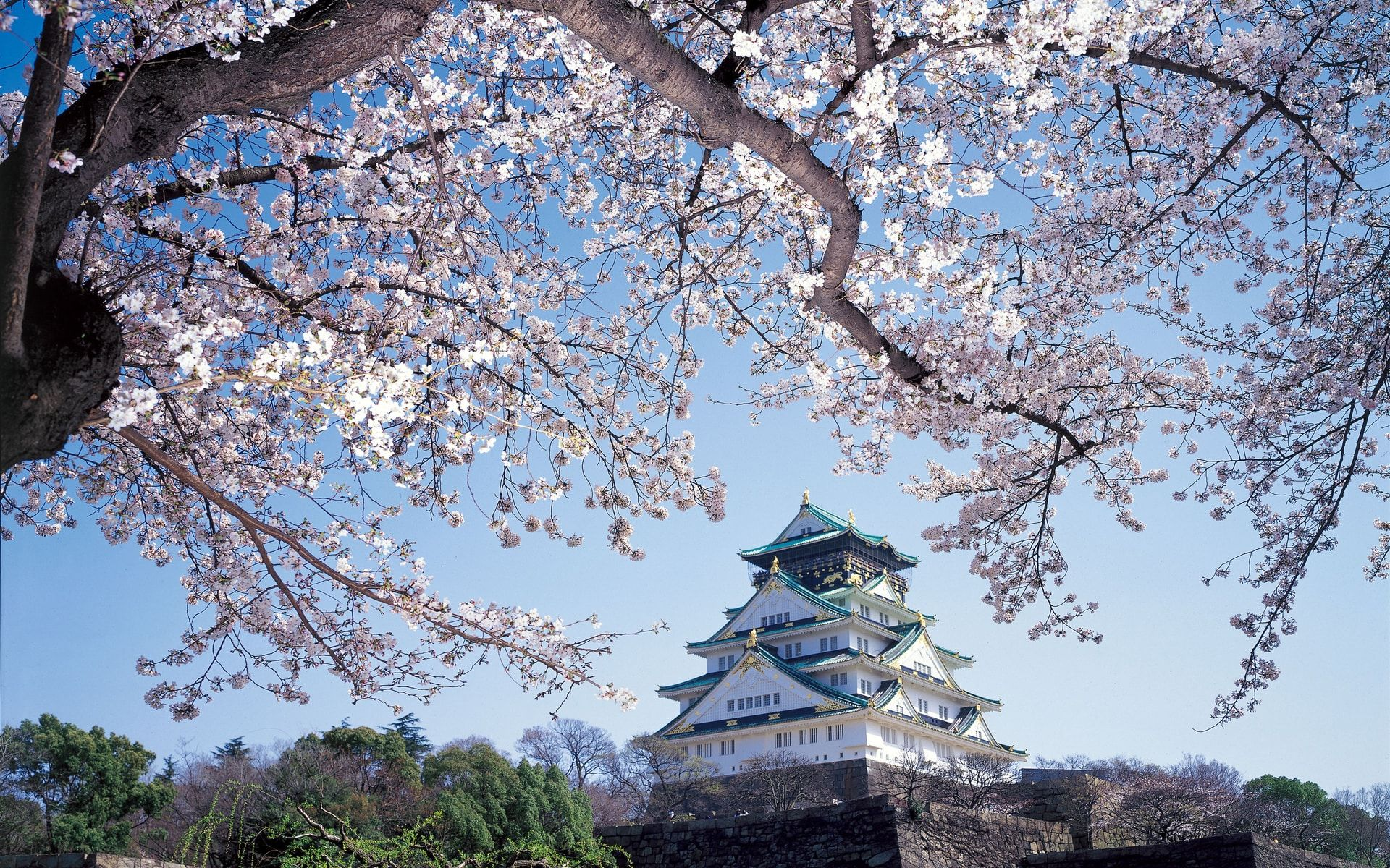 Sakura Forecast: Where And When To See Japan's Cherry Blossoms In 2018