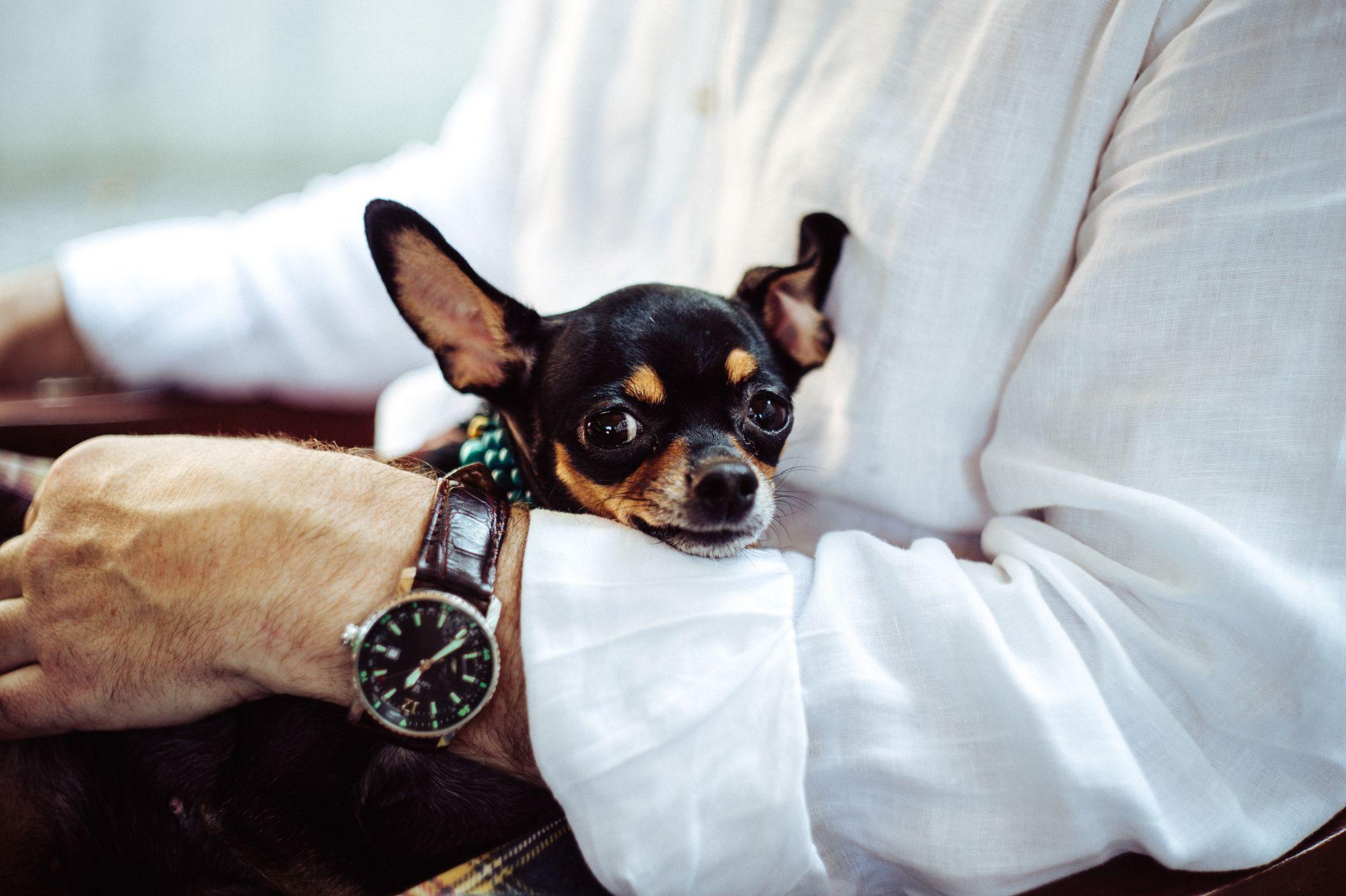 Posh Pups: 5 Luxury Designer Items For Dogs