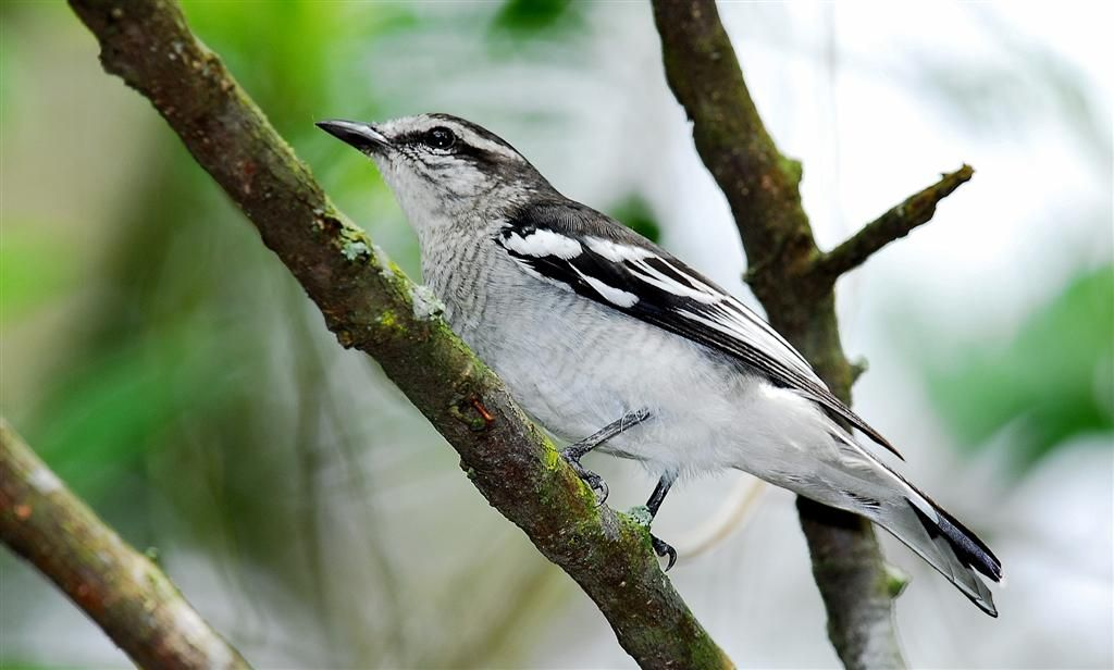 Top 10 Birds In Your Backyard: Fascinating Facts You Need To Know