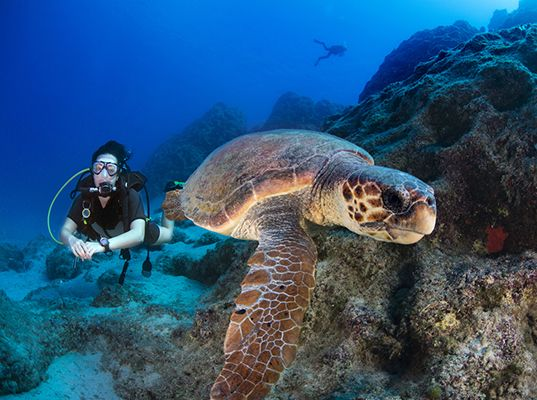 Eight diving destinations to see spectacular species