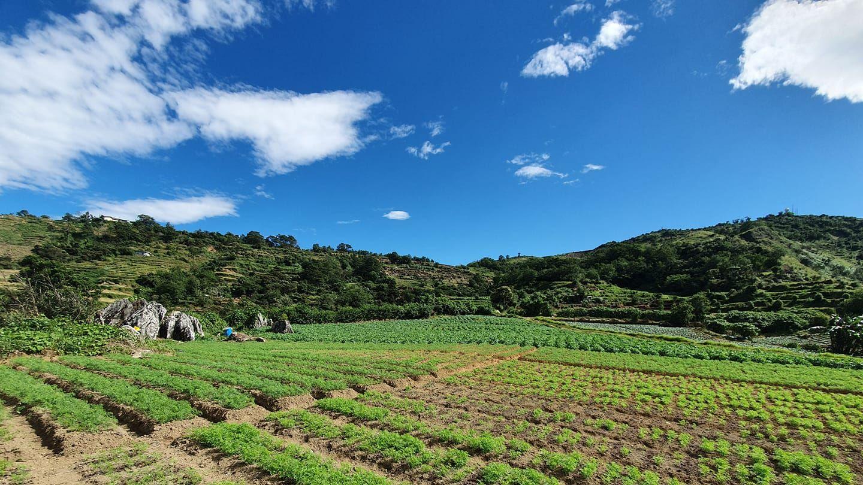 Photo: Sikap Farms