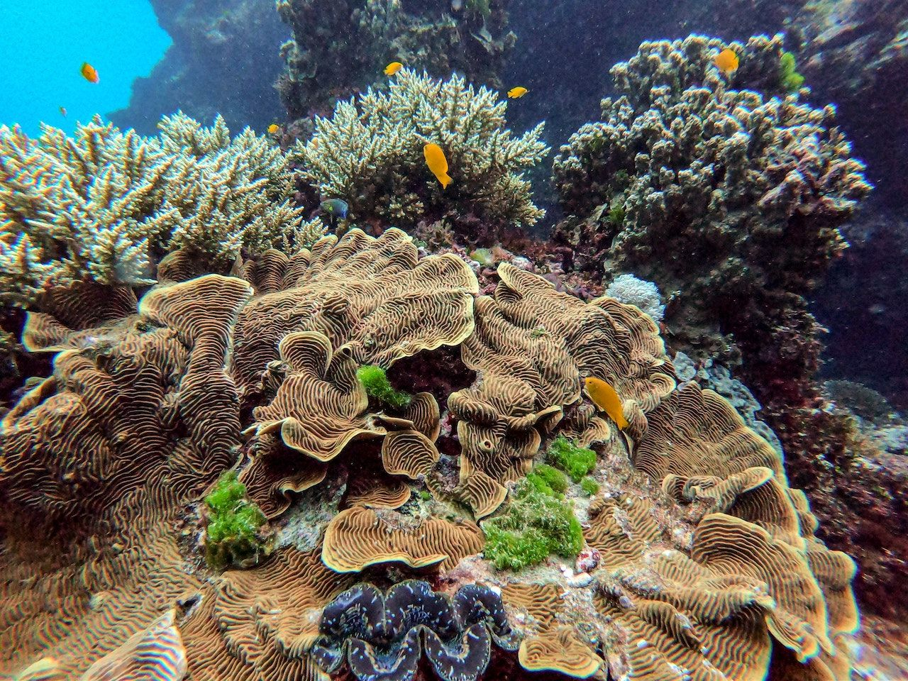 Take a Virtual Dive Through The Great Barrier Reef with David Attenborough