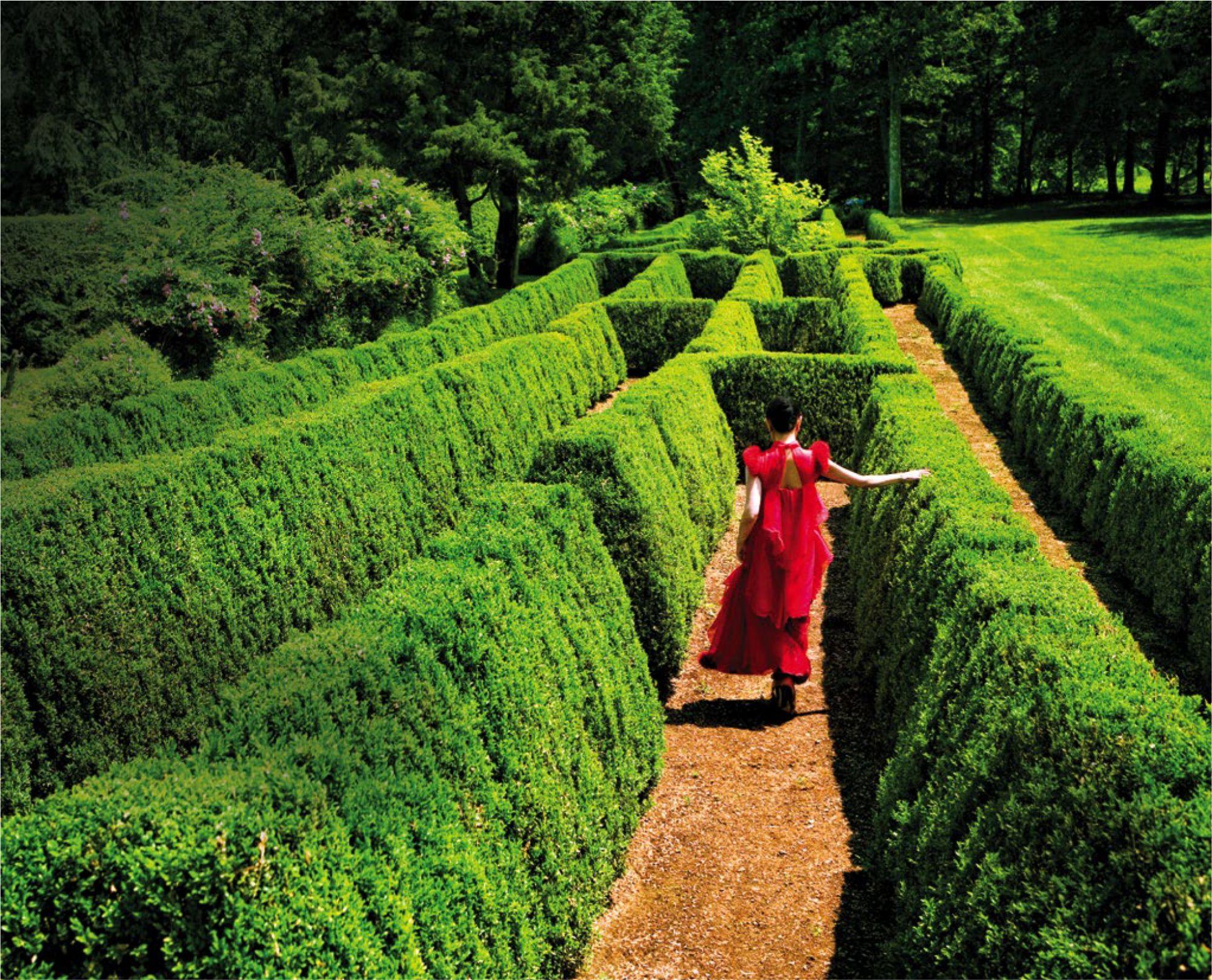 Lily O'Boyle's Gardens Is A Plantito And Plantita's Dreamland