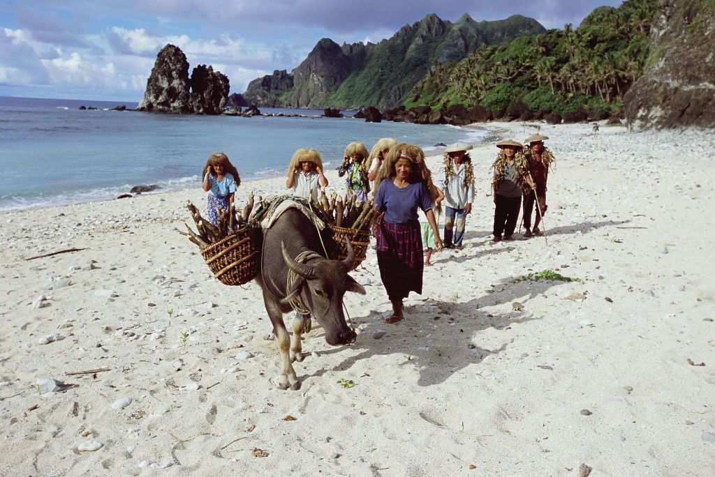 BATANES ISLANDS, PHILIPPINES: Everywhere in the Philippines people use carabaos or water buffalo (here called pagad) to carry heavy loads. Pictured on 2007 in Batanes Islands in Philippines. (Photo by Eric-Paul-Pierre PASQUIER/Gamma-Rapho via Getty Images)