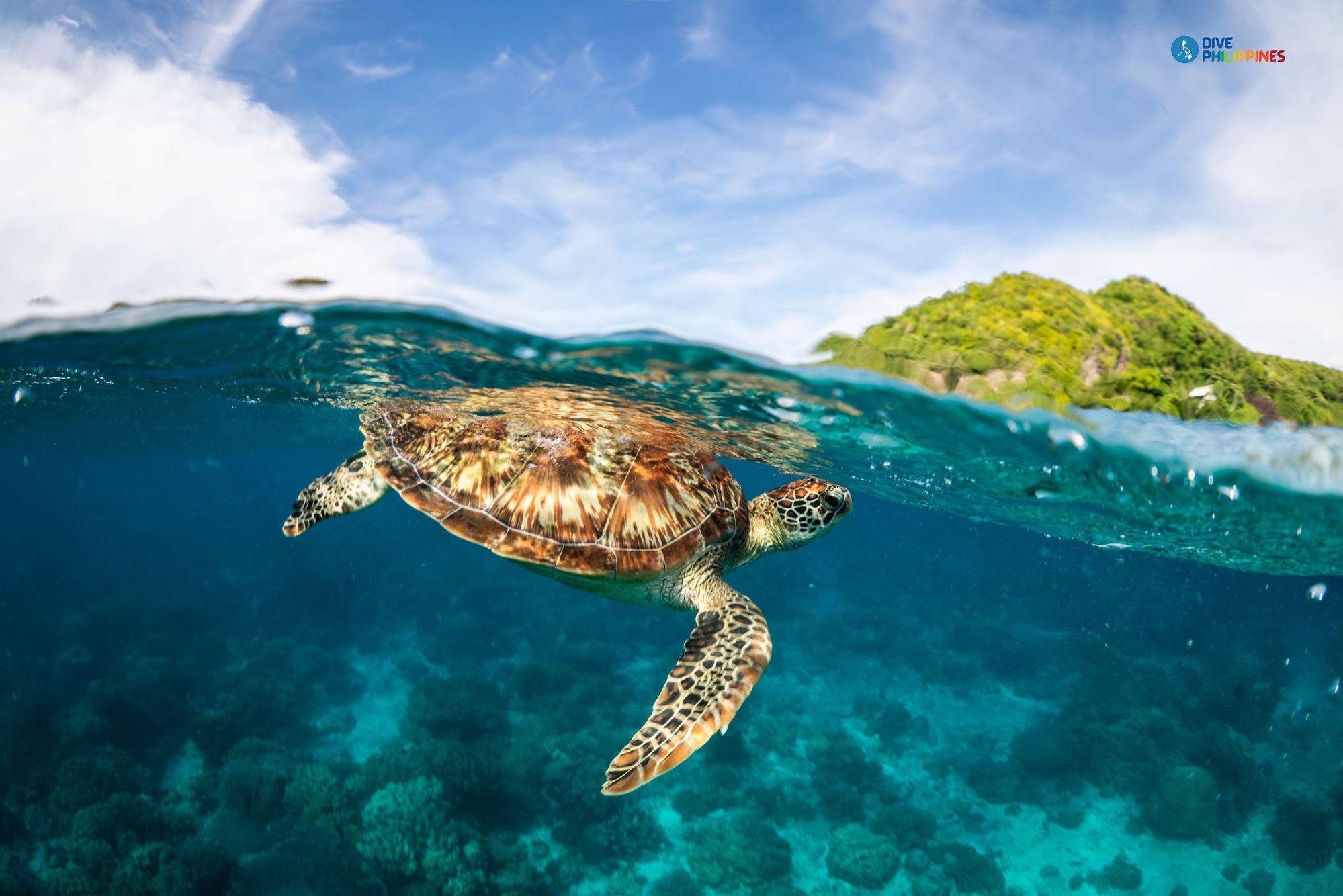 Dumaguete, Apo Island    Photo: Department of Tourism
