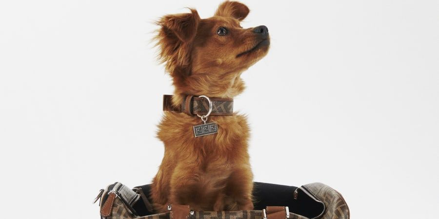 Fendi For Pets: The Brand Launches Luxury Accessories Line For Your Four-Legged Friends
