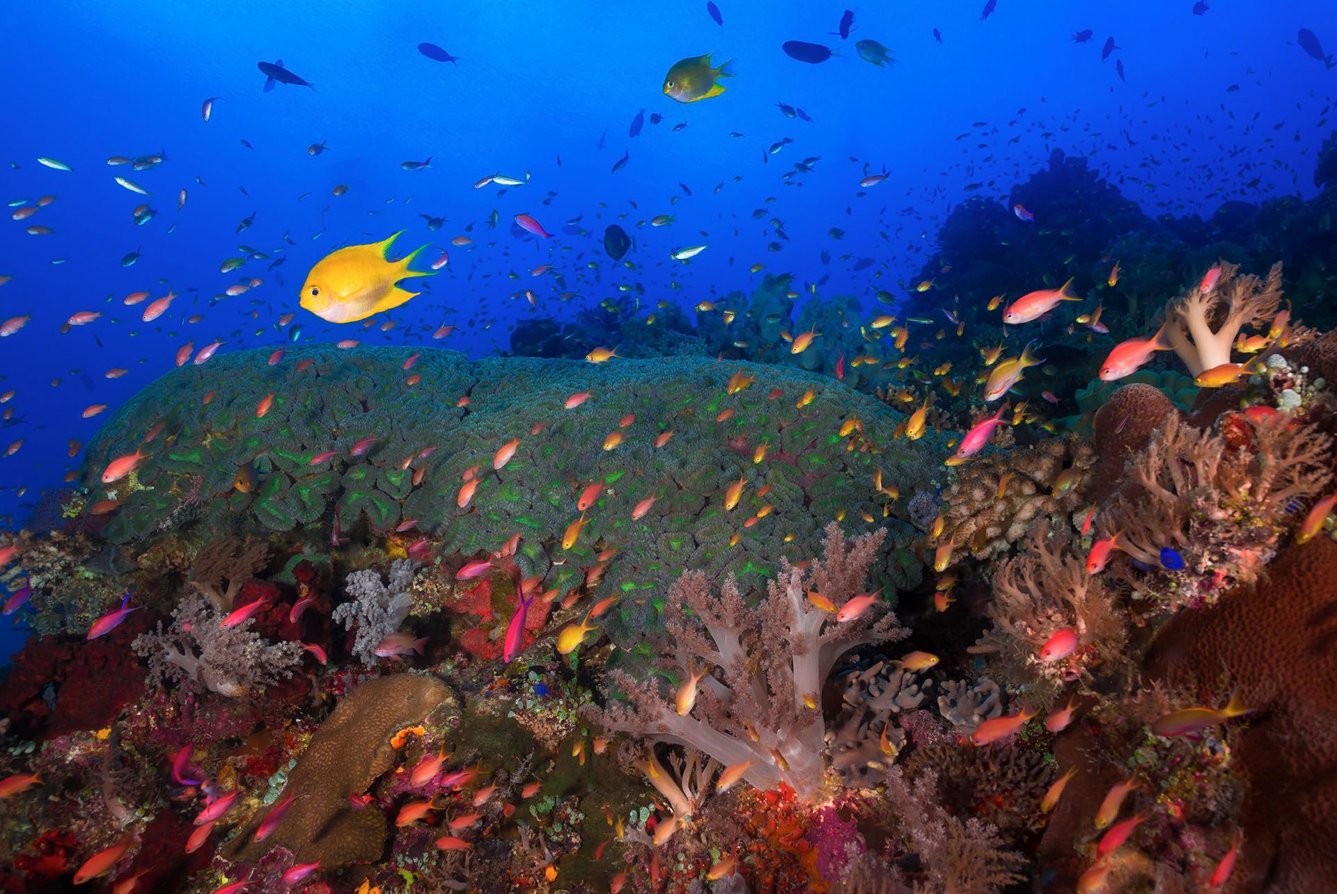 Tubbataha Reefs: Dive Into The Surreal Waters Of This UNESCO World Heritage Site