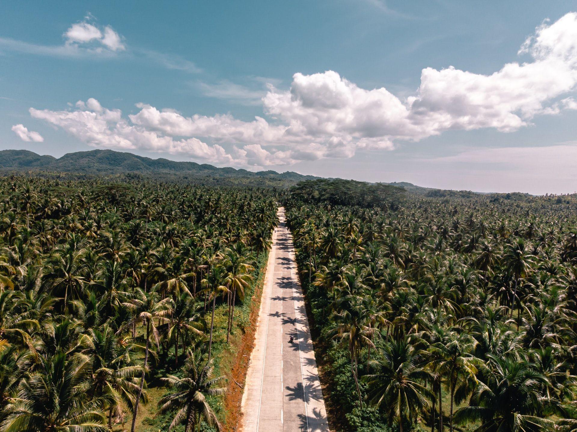 Siargao, Philippines | Photo by Alejandro Luengo\Unsplash