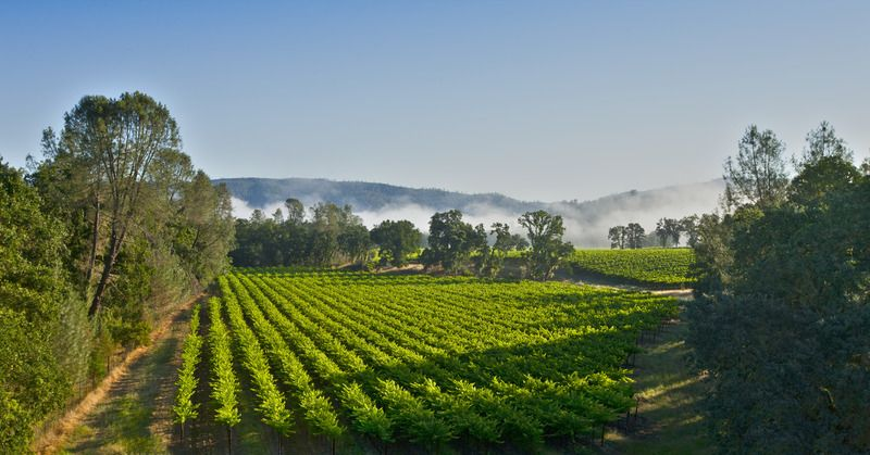 Why We're Falling For Californian Cabernet All Over Again