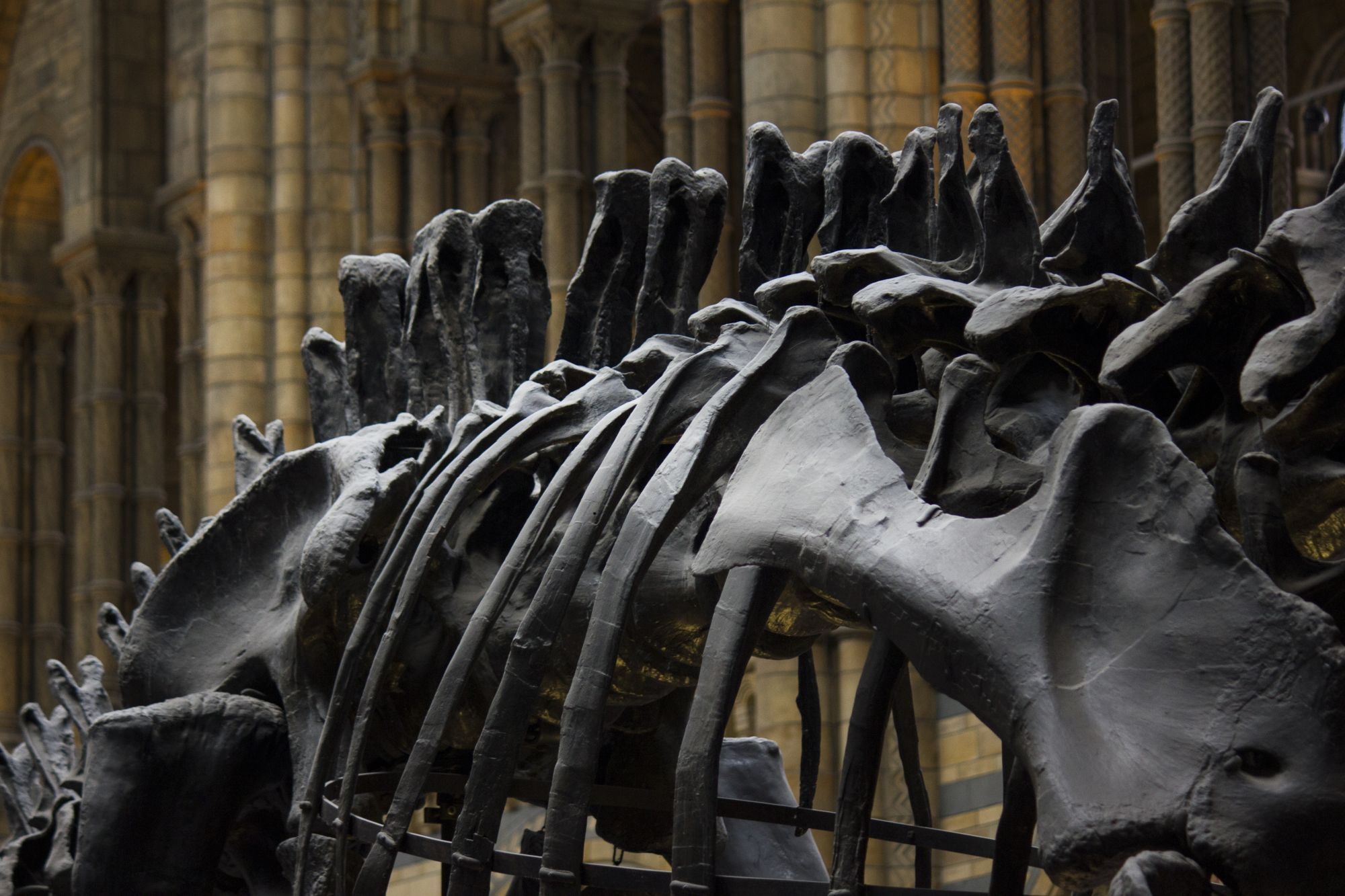 Are Dinosaur Fossils The Hot New Collectors' Item?