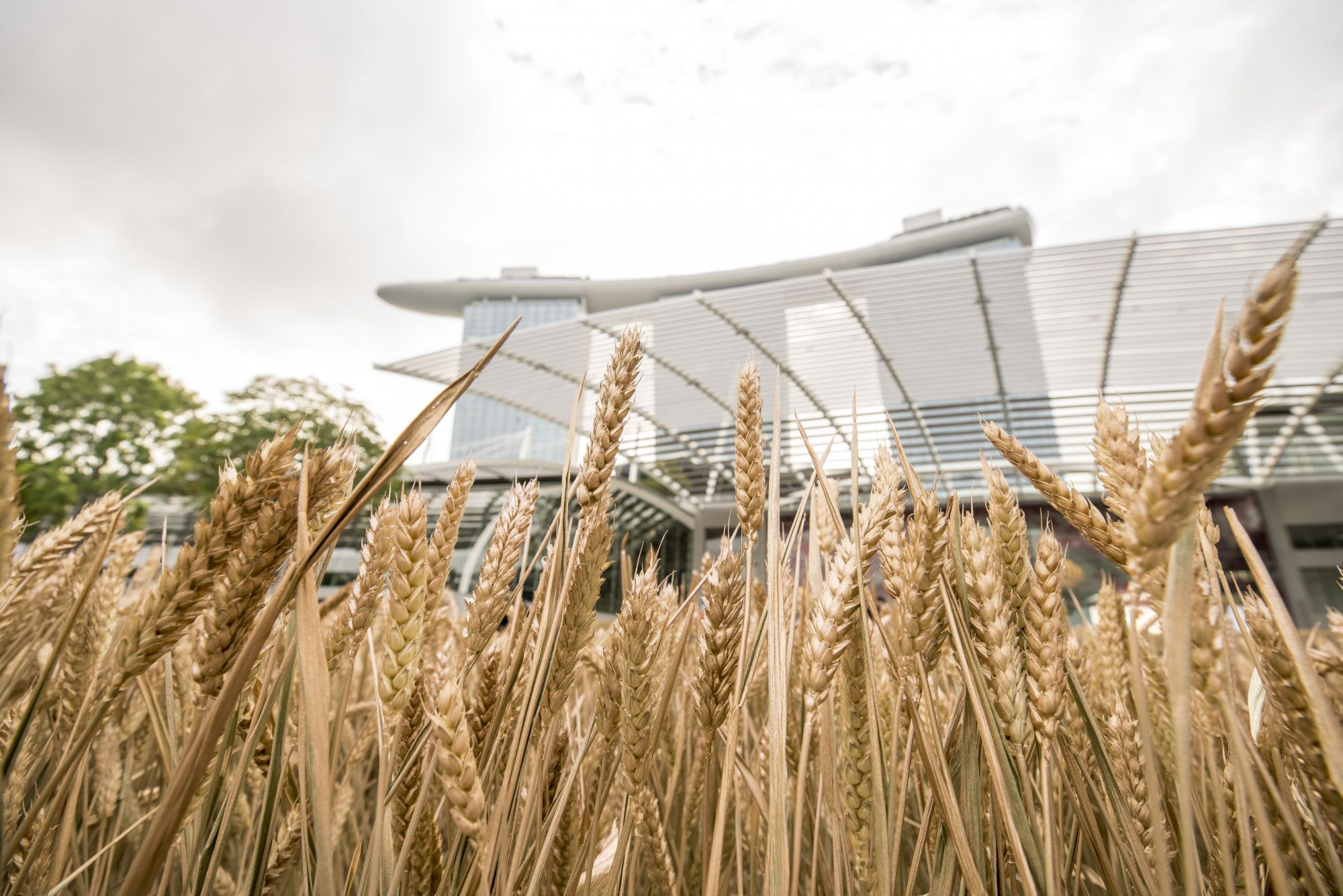 Fields of Gold: Les Bles De Chanel Transforms Marina Bay Sands