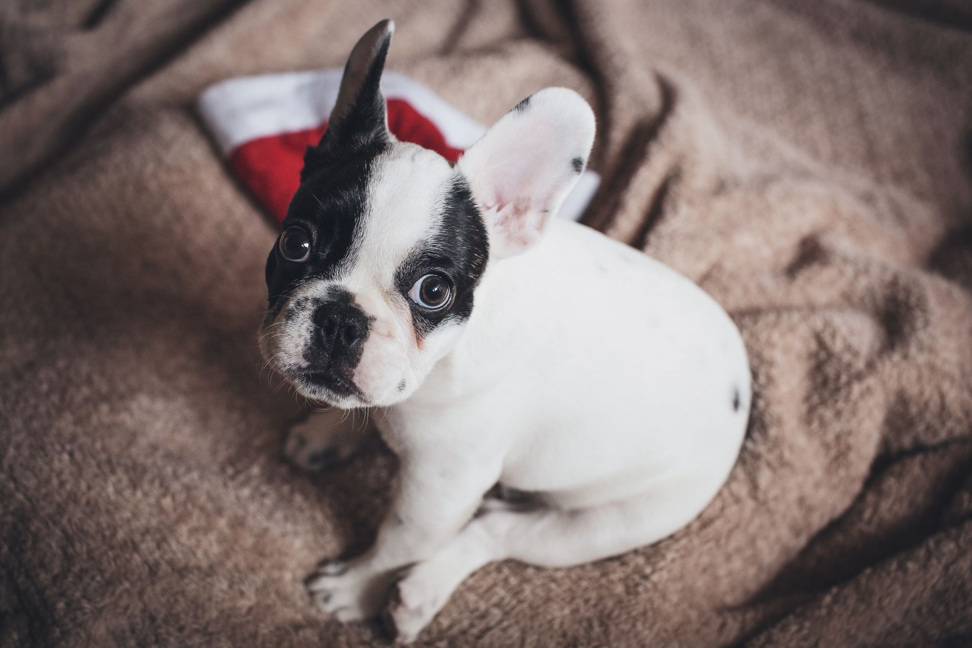 10 Decadent Gifts To Spoil Your Pets With This Christmas