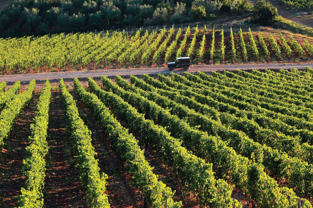 Wine Column: Terroir To The Fore