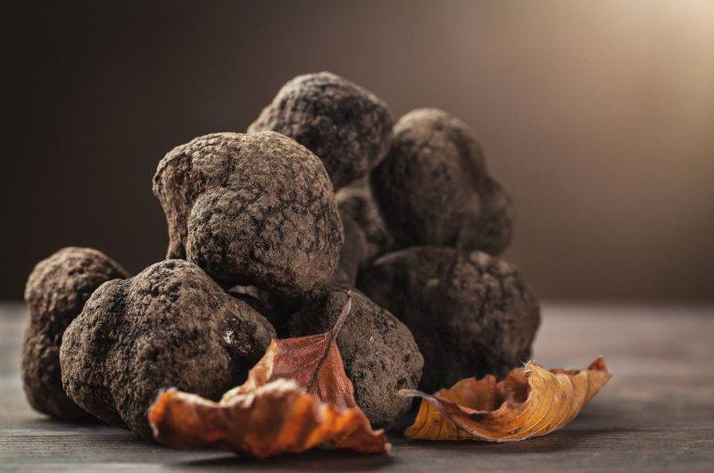 Indulge in Stellar at 1-Altitude's Truffle Menu This July
